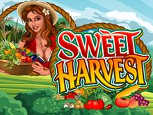 Игровой автомат Sweet Harvest на деньги – виртуальный способ игры